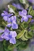 blue violets